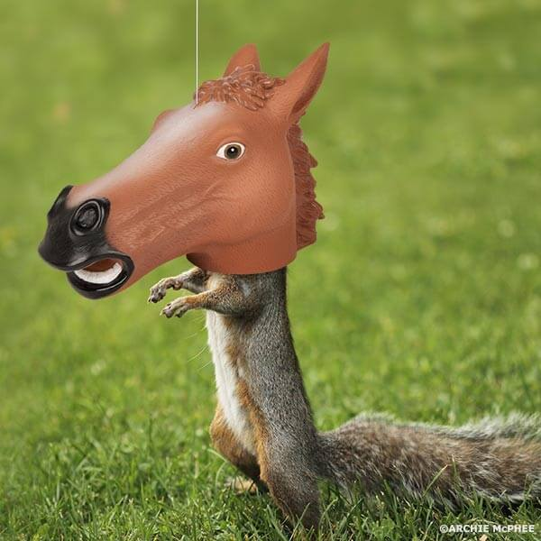 Horse Head Squirrel Feader